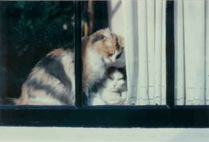 Holland Cats, NL 1997